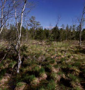 Randzonen von Mooren sind wichtige Lebensräume, Foto: B. Trapp
