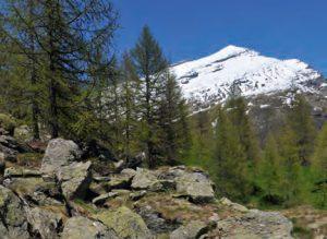 Subalpiner Lebensraum der Blindschleiche und anderer Reptilienarten auf 1.600 m ü. NN im Kanton Wallis, Foto: A. Meyer