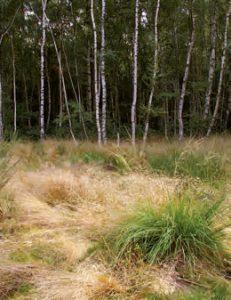 Die Blindschleiche ist häufig in Moorund Heidelandschaften zuhause, Foto: R. Podloucky