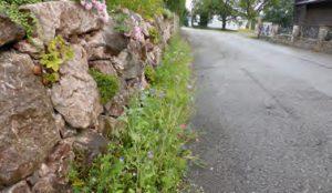 Reptilienfreundliche Mauer mit Versteckmöglichkeiten, Foto: W. Selbertinger